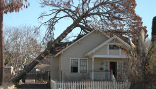 Twin Cities Area Emergency Tree Removal