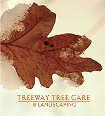 Twin Cities Area Tree Service